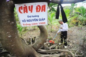 Cây đa do đại tướng Võ Nguyên Giáp đã trồng năm 1999